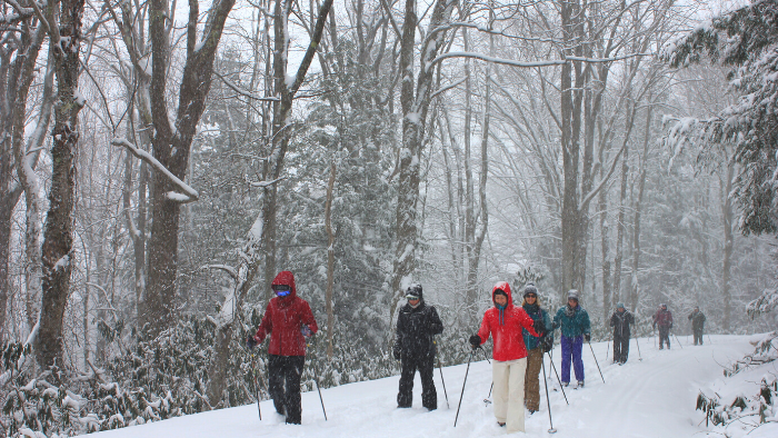 A group of women cross country skiing in a forest in Canada.