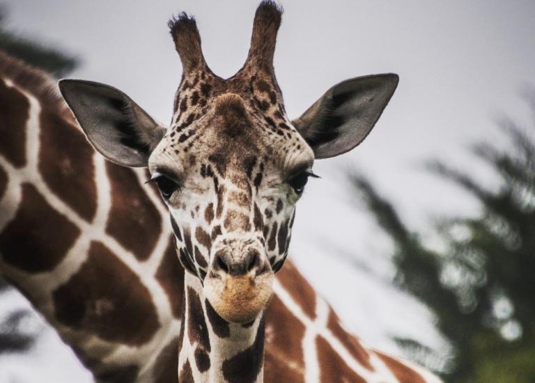 Cincinnati Zoo Africa Slumber Party