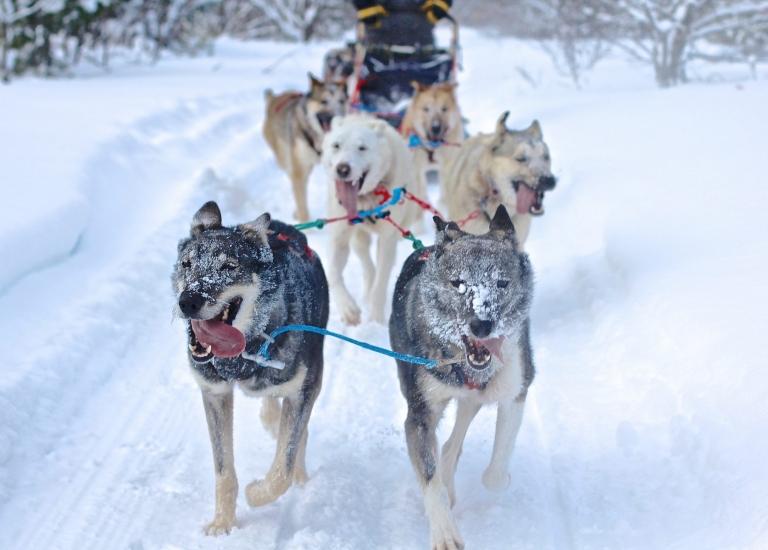 Michigan's UP Frozen Adventure