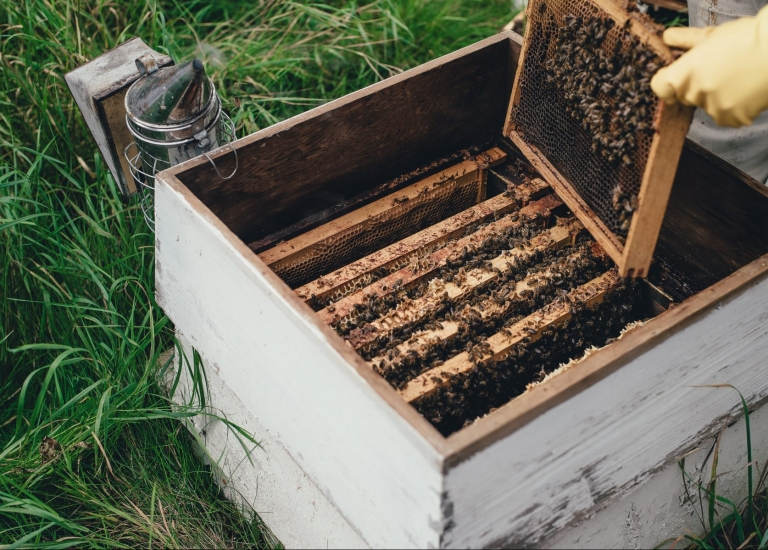 Chicago Bee Keeping Workshop