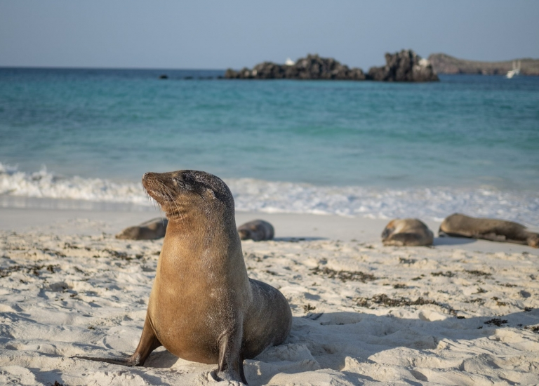 Galapagos Island Hopping and Underwater Adventure