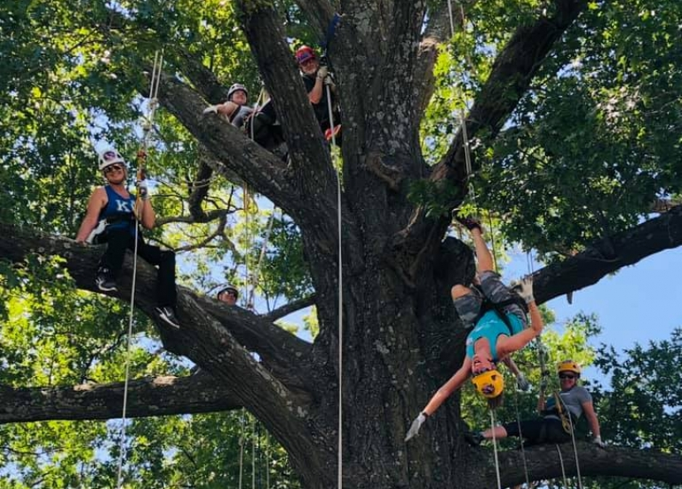 Tree Climbing in Kansas City
