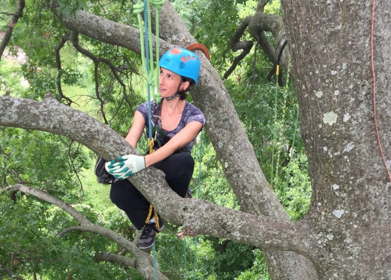 St. Louis Tree Climbing Adventure