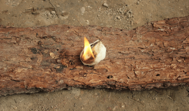 Small flame from on a log lit during a survival skills class