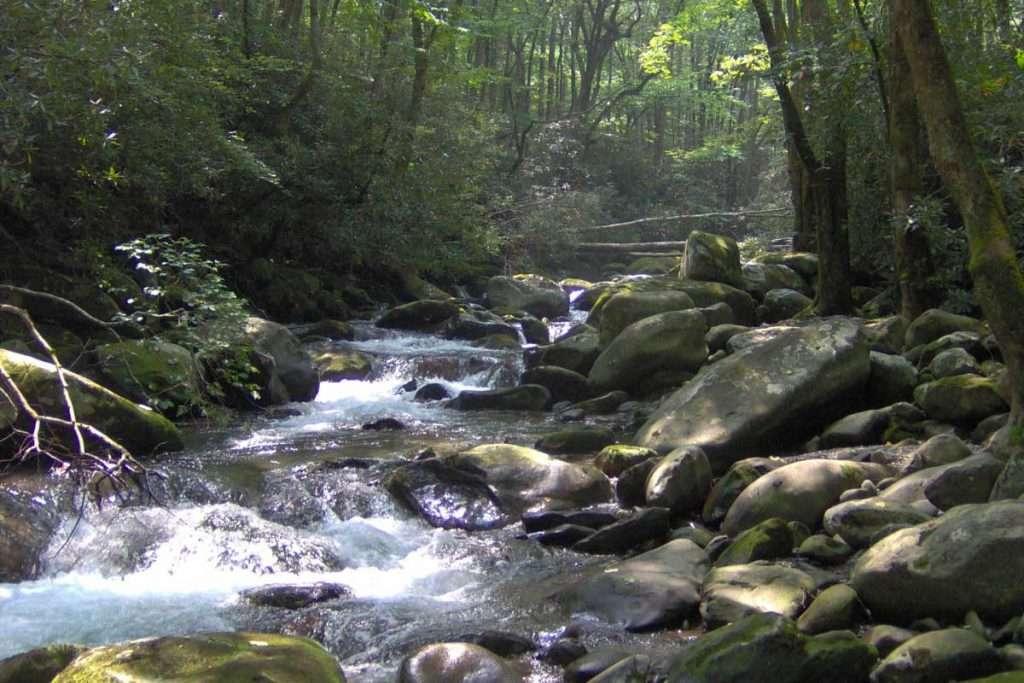 porters creek trail hiking